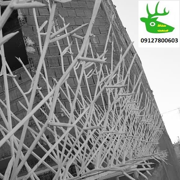 حفاظ شاخ گوزنی در تهران و کرج