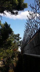حفاظ شاخ گوزنی در کرج