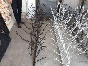 حفاظ شاخ گوزنی در بندرعباس