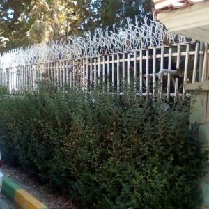 حفاظ شاخ گوزنی در خوزستان