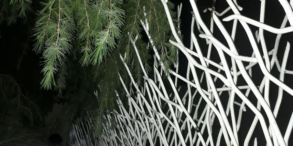 حفاظ شاخ گوزنی در پردیس
