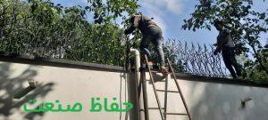 حفاظ شاخ گوزنی در دیوار باغ